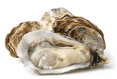 Hàu - Món quà quý của biển cả